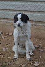 TONIA, Hund, Border Collie-Mix in Spanien - Bild 6