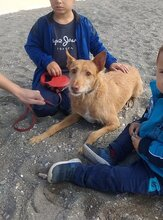 CANELO, Hund, Podenco-Mix in Spanien - Bild 4