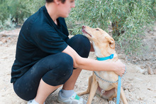 CANELO, Hund, Podenco-Mix in Spanien - Bild 9