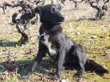 TONI, Hund, Border Collie in Spanien - Bild 10