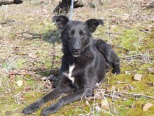 TONI, Hund, Border Collie in Spanien - Bild 3