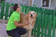 MOJO, Hund, Golden Retriever-Mix in Spanien - Bild 3