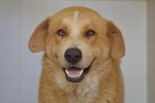 MOJO, Hund, Golden Retriever-Mix in Spanien - Bild 5