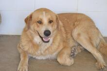 MOJO, Hund, Golden Retriever-Mix in Spanien - Bild 8