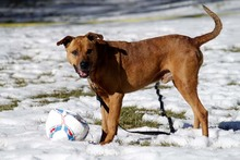 BASDORF, Hund, Boxer-Mix in Neuhausen - Bild 4