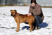 BASDORF, Hund, Boxer-Mix in Neuhausen - Bild 7