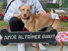 INKA, Hund, Podenco-Mix in Spanien - Bild 10