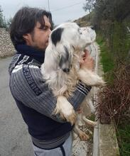 DIANA, Hund, English Setter in Granzin - Bild 7