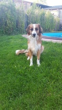 GOLDEN-BOY, Hund, Mischlingshund in Offenburg - Bild 3