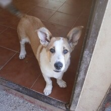 DONETTE, Hund, Podenco-Mix in Spanien - Bild 9