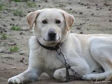 FAISCA, Hund, Labrador-Mix in Portugal - Bild 10