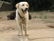 FAISCA, Hund, Labrador-Mix in Portugal - Bild 11