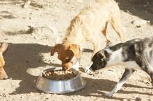 TIPONI, Hund, Terrier-Mix in Spanien - Bild 5