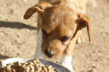 TIPONI, Hund, Terrier-Mix in Spanien - Bild 7