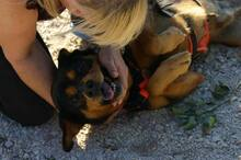 HAPPY, Hund, Mischlingshund in Portugal - Bild 4