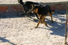 HAPPY, Hund, Mischlingshund in Portugal - Bild 5
