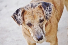 DARWIN, Hund, Australian Cattle Dog-Mix in Spanien - Bild 2