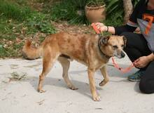 DARWIN, Hund, Australian Cattle Dog-Mix in Spanien - Bild 9