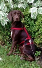 BUTTONS, Hund, Labrador-Mix in Ihlow - Bild 13