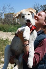 MARCIA, Hund, Labrador-Golden Retriever-Mix in Spanien - Bild 13