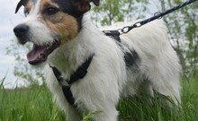 FELIX, Hund, Terrier-Mix in Ungarn - Bild 11
