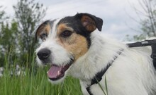 FELIX, Hund, Terrier-Mix in Ungarn - Bild 12