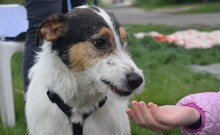 FELIX, Hund, Terrier-Mix in Ungarn - Bild 6