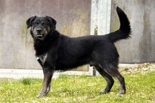 RICK, Hund, Labrador-Mix in Neuhausen - Bild 2