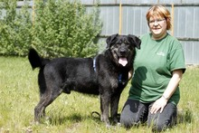 RICK, Hund, Labrador-Mix in Neuhausen - Bild 3