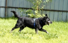 RICK, Hund, Labrador-Mix in Neuhausen - Bild 5