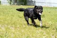 RICK, Hund, Labrador-Mix in Neuhausen - Bild 6