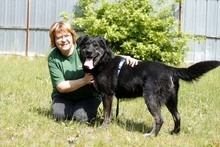 RICK, Hund, Labrador-Mix in Neuhausen - Bild 7