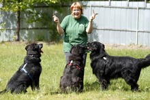 RICK, Hund, Labrador-Mix in Neuhausen - Bild 8