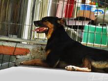BONNY, Hund, Pinscher-Mix in Portugal - Bild 5