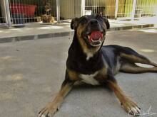 BONNY, Hund, Pinscher-Mix in Portugal - Bild 9