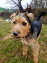 SAMKO, Hund, Terrier-Mix in Slowakische Republik - Bild 10
