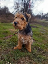 SAMKO, Hund, Terrier-Mix in Slowakische Republik - Bild 11