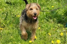 SAMKO, Hund, Terrier-Mix in Slowakische Republik - Bild 3