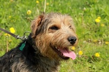 SAMKO, Hund, Terrier-Mix in Slowakische Republik - Bild 7