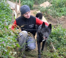 RONY2, Hund, Akita Inu-Mix in Slowakische Republik - Bild 2