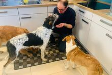 ANGELINO, Hund, Jagdhund-Mix in Italien - Bild 5