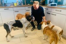 ANGELINO, Hund, Jagdhund-Mix in Italien - Bild 6