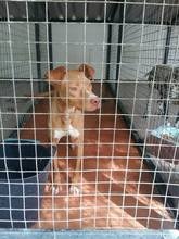 MARITA, Hund, Podenco-Pointer-Mix in Spanien - Bild 7