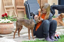 DEAN, Hund, Podenco-Mix in Waake - Bild 13