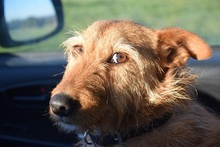 FRIEDA, Hund, Terrier-Mix in Wessobrunn - Bild 1