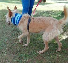 YUNO, Hund, Podenco-Mix in Spanien - Bild 5