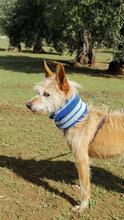 YUNO, Hund, Podenco-Mix in Spanien - Bild 7