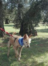 YUNO, Hund, Podenco-Mix in Spanien - Bild 8