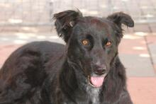 PENNY, Hund, Collie-Mix in Hoogstede - Bild 11