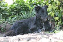 PENNY, Hund, Collie-Mix in Hoogstede - Bild 2